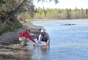Two anglers standing the river with King salmon after Alaska Kasilof river fishing