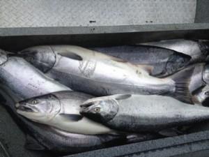 Daily Kenai fishing report