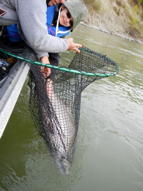 kenai-fishing-report-kasilof/  Boy and kenai king salmon in net