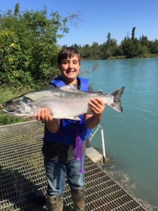Silver Salmon Kenai